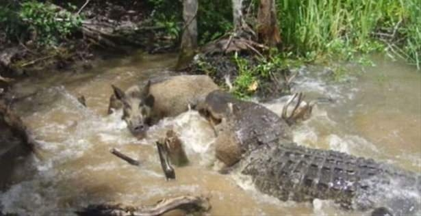 Hayvanlar dünyasından vahşi kareler! 115