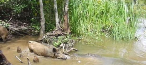 Hayvanlar dünyasından vahşi kareler! 118