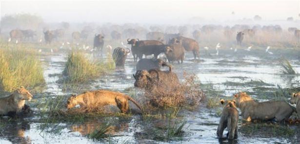Hayvanlar dünyasından vahşi kareler! 128