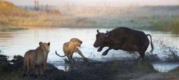 Hayvanlar dünyasından vahşi kareler! 131