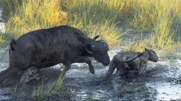 Hayvanlar dünyasından vahşi kareler! 134