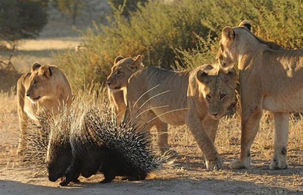 Hayvanlar dünyasından vahşi kareler! 135