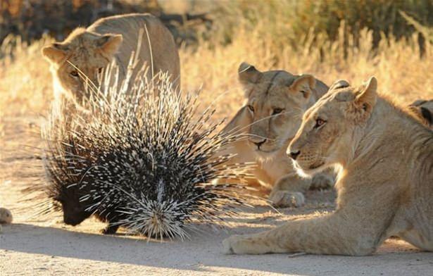 Hayvanlar dünyasından vahşi kareler! 136