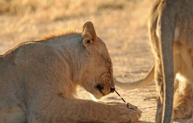 Hayvanlar dünyasından vahşi kareler! 138