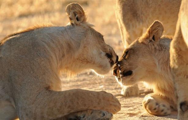 Hayvanlar dünyasından vahşi kareler! 140