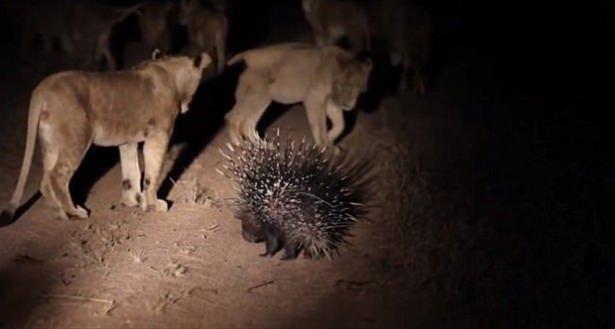 Hayvanlar dünyasından vahşi kareler! 145