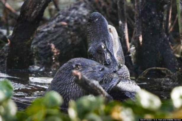 Hayvanlar dünyasından vahşi kareler! 150