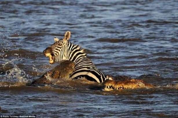 Hayvanlar dünyasından vahşi kareler! 154
