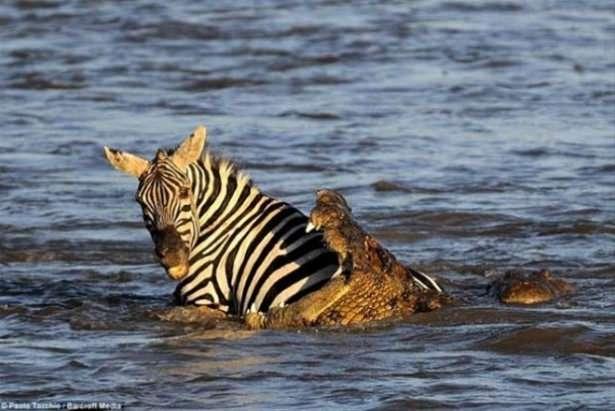 Hayvanlar dünyasından vahşi kareler! 155