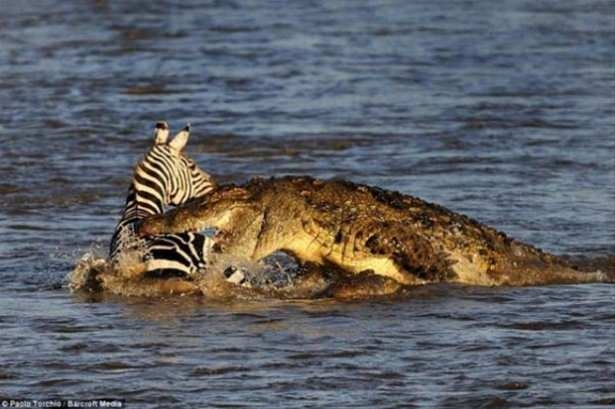 Hayvanlar dünyasından vahşi kareler! 156
