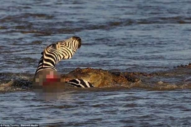 Hayvanlar dünyasından vahşi kareler! 157