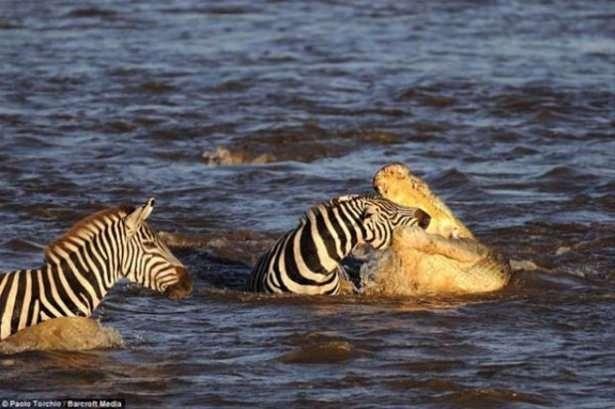 Hayvanlar dünyasından vahşi kareler! 158