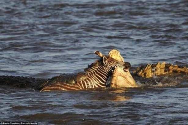 Hayvanlar dünyasından vahşi kareler! 159