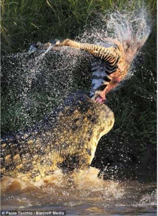 Hayvanlar dünyasından vahşi kareler! 160