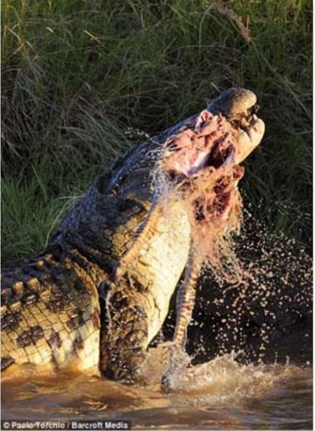 Hayvanlar dünyasından vahşi kareler! 161