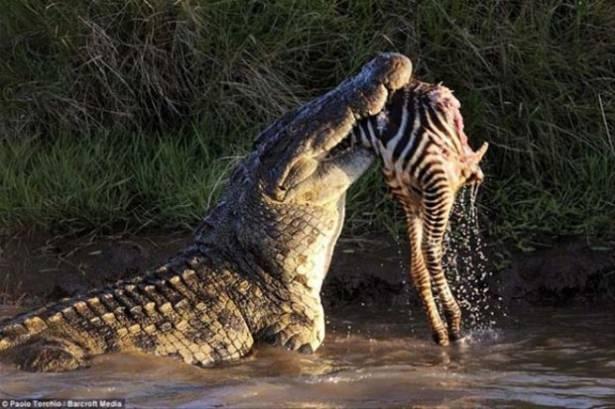 Hayvanlar dünyasından vahşi kareler! 162