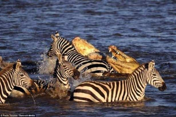 Hayvanlar dünyasından vahşi kareler! 164