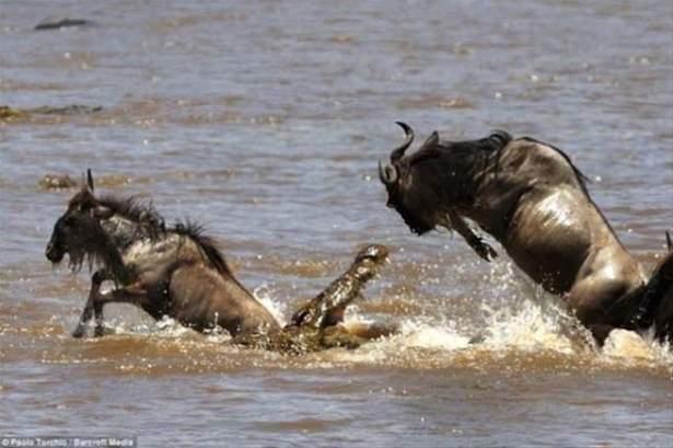 Hayvanlar dünyasından vahşi kareler! 167