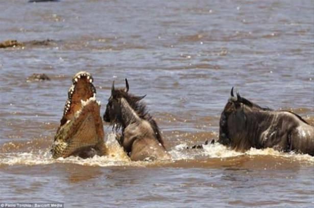 Hayvanlar dünyasından vahşi kareler! 168