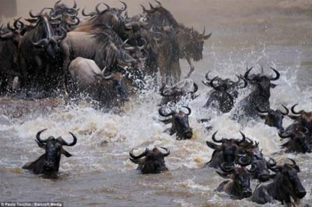 Hayvanlar dünyasından vahşi kareler! 170