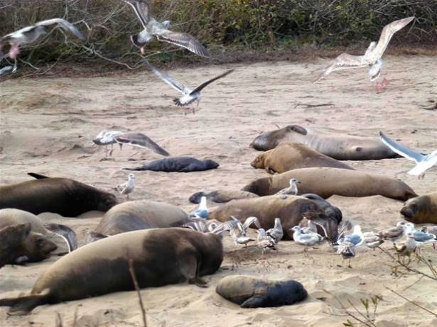Hayvanlar dünyasından vahşi kareler! 185
