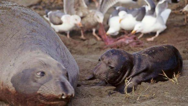 Hayvanlar dünyasından vahşi kareler! 186