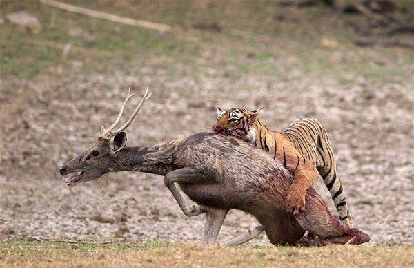 Hayvanlar dünyasından vahşi kareler! 2