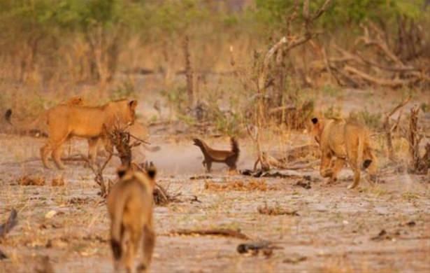 Hayvanlar dünyasından vahşi kareler! 209