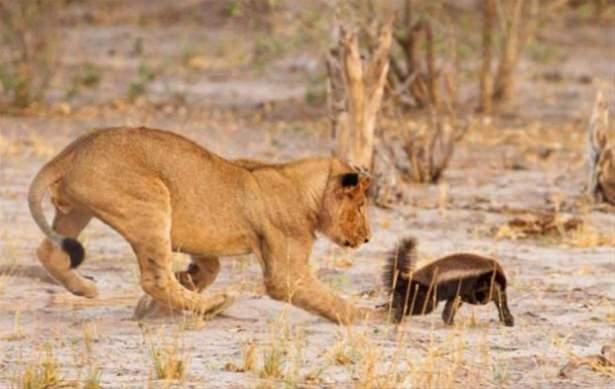 Hayvanlar dünyasından vahşi kareler! 210