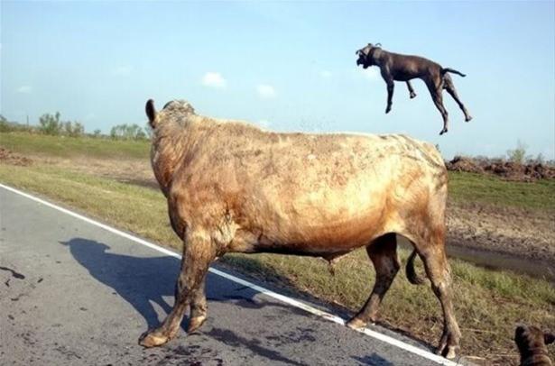 Hayvanlar dünyasından vahşi kareler! 214