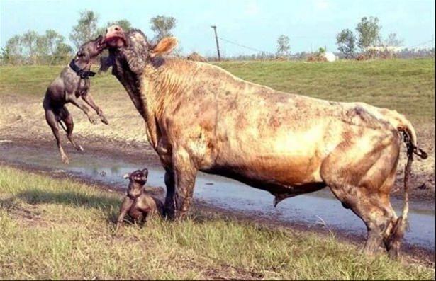 Hayvanlar dünyasından vahşi kareler! 215