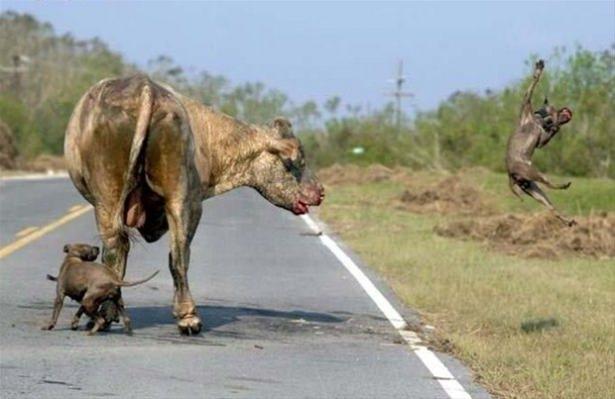 Hayvanlar dünyasından vahşi kareler! 216