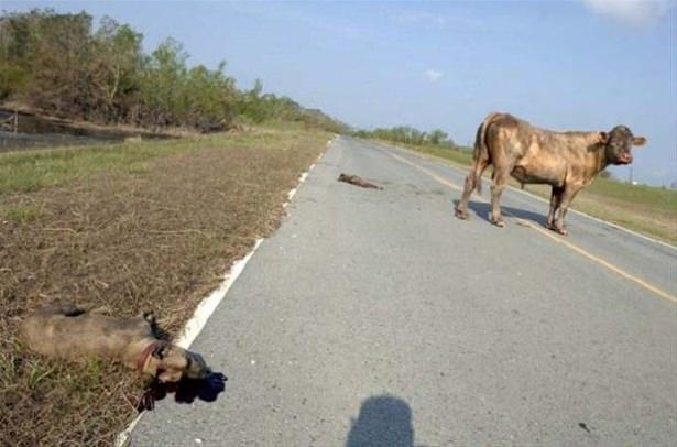 Hayvanlar dünyasından vahşi kareler! 217