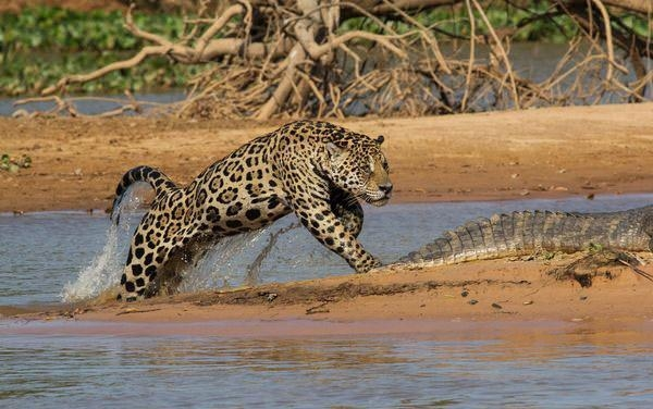 Hayvanlar dünyasından vahşi kareler! 220