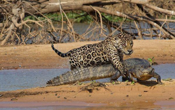 Hayvanlar dünyasından vahşi kareler! 221