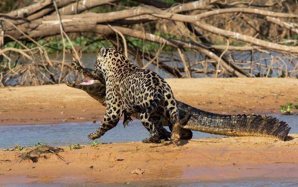 Hayvanlar dünyasından vahşi kareler! 223