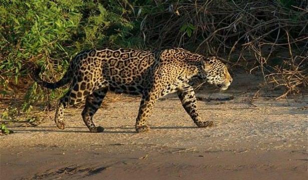 Hayvanlar dünyasından vahşi kareler! 224