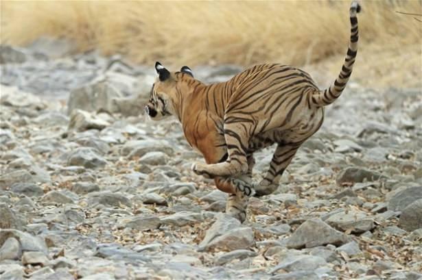 Hayvanlar dünyasından vahşi kareler! 28