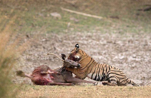 Hayvanlar dünyasından vahşi kareler! 3