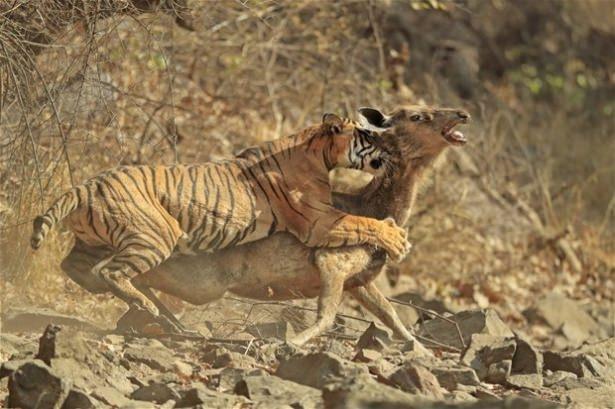 Hayvanlar dünyasından vahşi kareler! 31