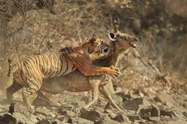 Hayvanlar dünyasından vahşi kareler! 32