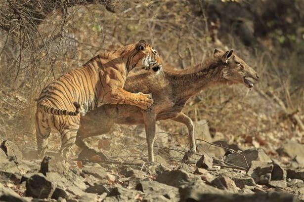Hayvanlar dünyasından vahşi kareler! 33