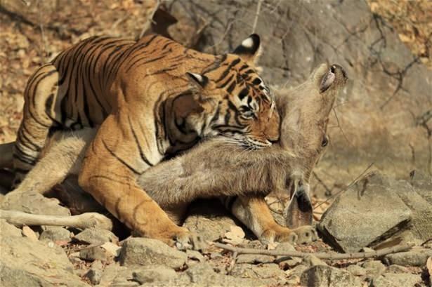 Hayvanlar dünyasından vahşi kareler! 36