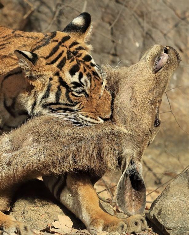 Hayvanlar dünyasından vahşi kareler! 37