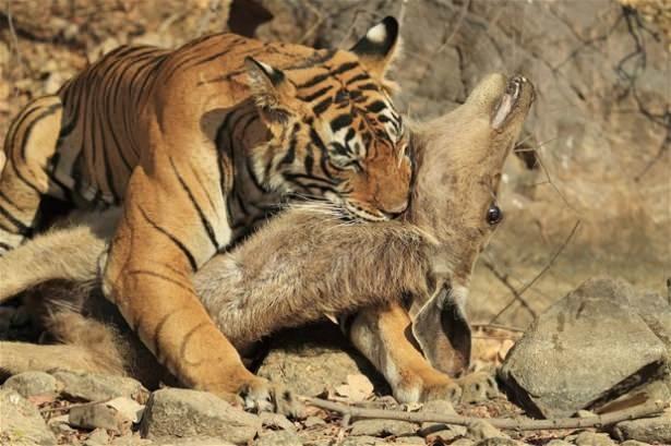 Hayvanlar dünyasından vahşi kareler! 39