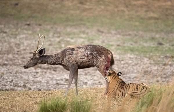 Hayvanlar dünyasından vahşi kareler! 4