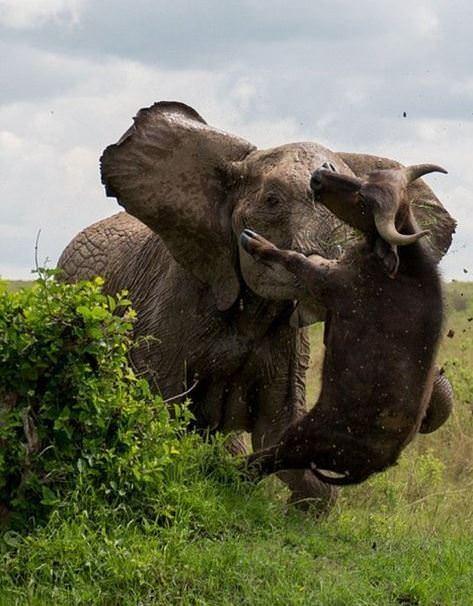Hayvanlar dünyasından vahşi kareler! 45