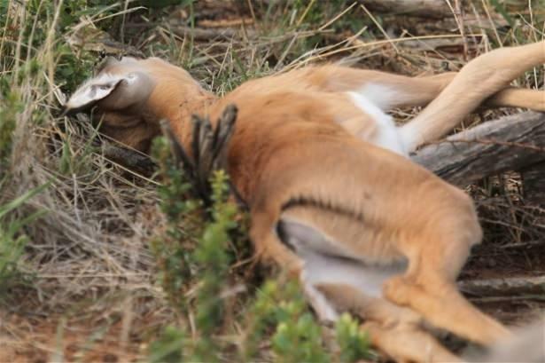 Hayvanlar dünyasından vahşi kareler! 6