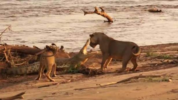 Hayvanlar dünyasından vahşi kareler! 60