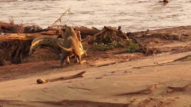 Hayvanlar dünyasından vahşi kareler! 66